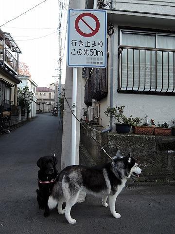 散歩屋日誌【30】_c0062832_15542063.jpg