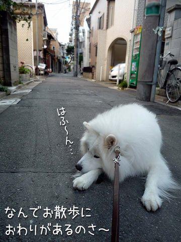 散歩屋日誌【30】_c0062832_16230338.jpg