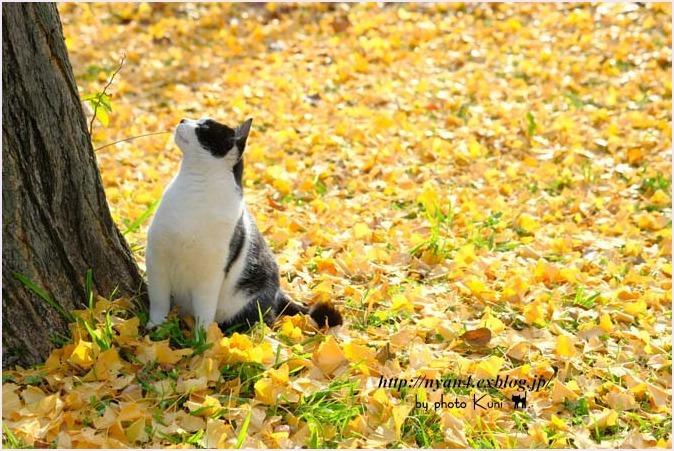 銀杏の木の下で_f0166234_10073729.jpg