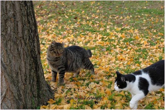 銀杏の木の下で_f0166234_10084283.jpg