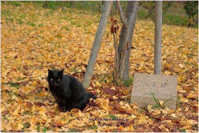 銀杏の木の下で_f0166234_10085599.jpg