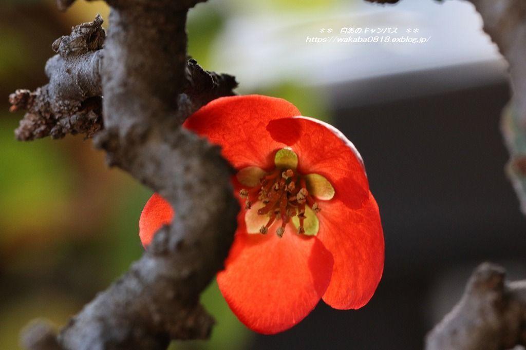 枯れ木にも新芽が出始めていました(*^-^*)_e0052135_13545089.jpg