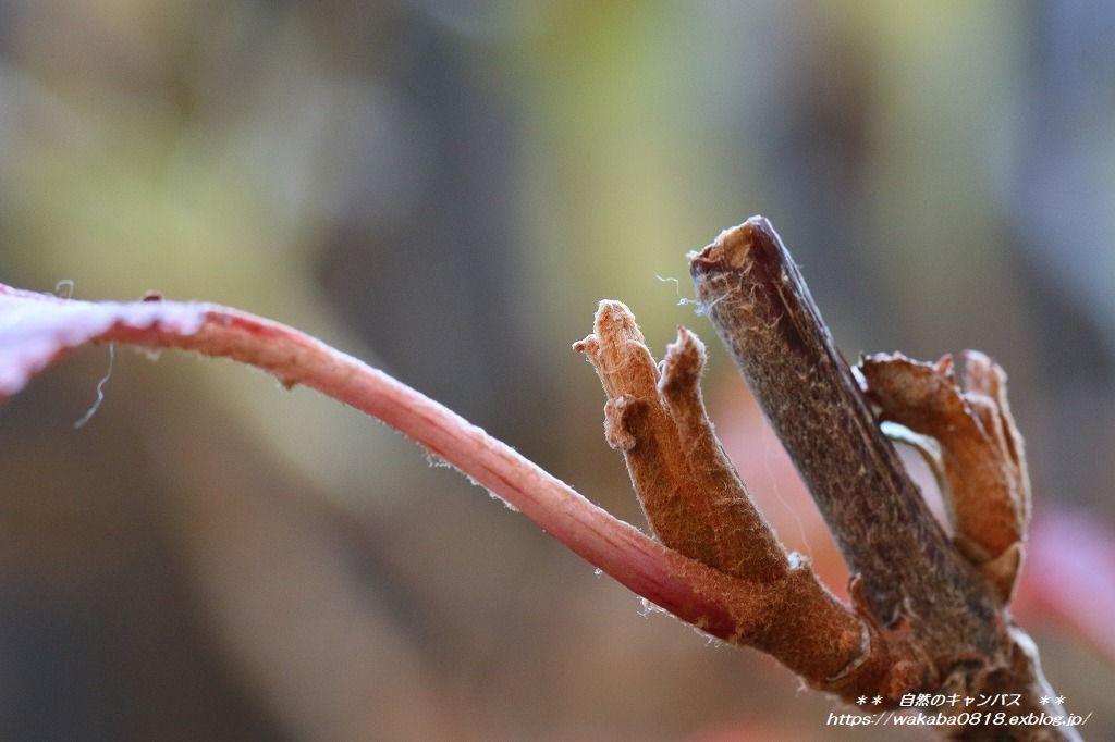 枯れ木にも新芽が出始めていました(*^-^*)_e0052135_13554623.jpg