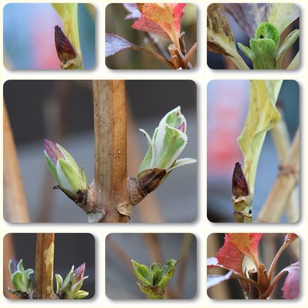 枯れ木にも新芽が出始めていました(*^-^*)_e0052135_13561916.jpg
