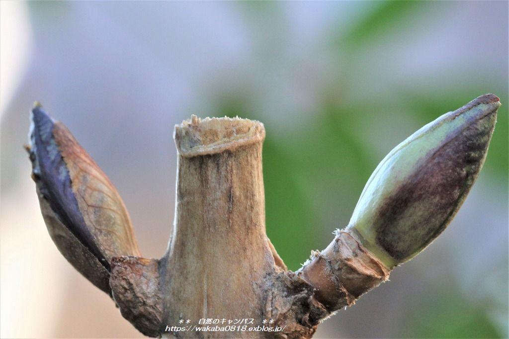 枯れ木にも新芽が出始めていました(*^-^*)_e0052135_13562689.jpg