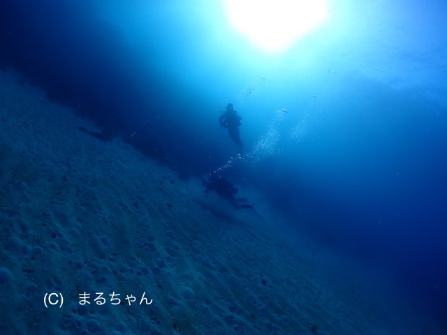 西風=べた凪な1日でした♪ 〜今日も透明度抜群な川奈の海から〜_b0163039_14534400.jpg