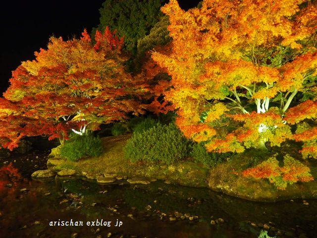 栗林公園のライトアップ紅葉2019と美味しい天麩羅うどん♡_e0406439_20585979.jpg