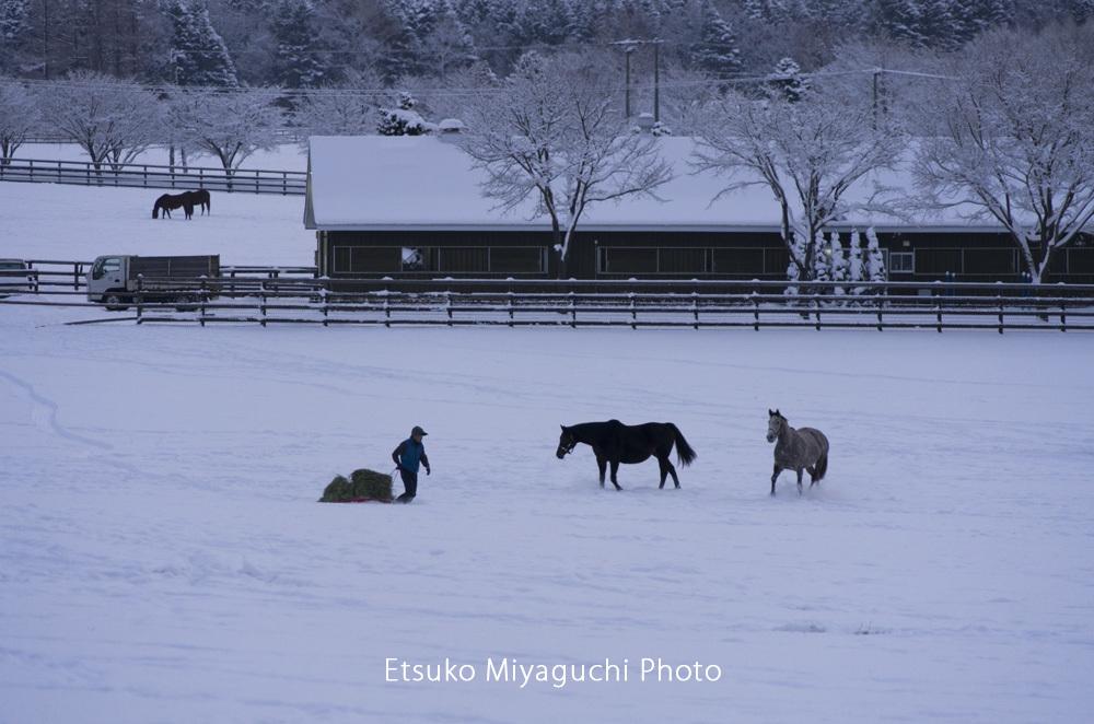 雪景色の牧場_f0152939_17232092.jpg