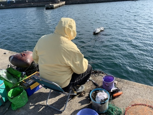 垂水漁港の釣り(神戸)_b0279441_23555388.jpg