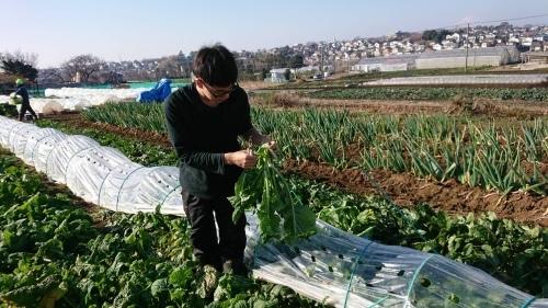今朝は 千貫君 飯田 岬さんの3名で作業です 葱の土寄せから始まってレモンバーベナのトンネル張り 等_c0222448_15403262.jpg