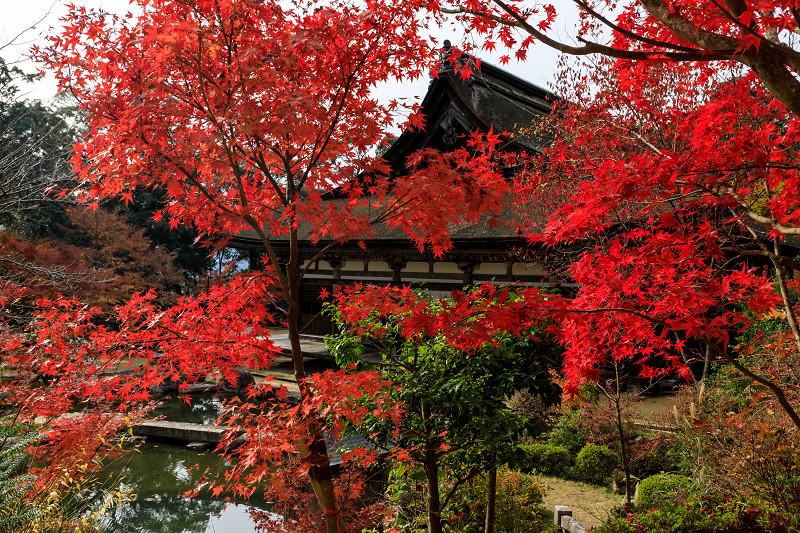 紅葉が彩る滋賀2019 善水寺の彩り_f0155048_21381680.jpg