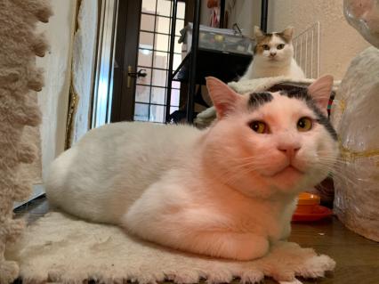 ヒーターの前で暖を取る廊下組の二人。_a0028451_10530137.jpg