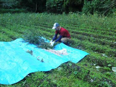 令和元年度産『焙煎白エゴマ粒』販売スタート!無農薬・無化学肥料で育てた「菊池水源産エゴマ」です!_a0254656_17152626.jpg