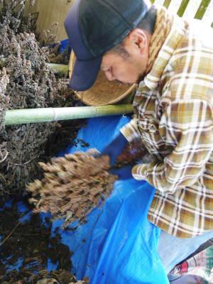 令和元年度産『焙煎白エゴマ粒』販売スタート!無農薬・無化学肥料で育てた「菊池水源産エゴマ」です!_a0254656_17214838.jpg
