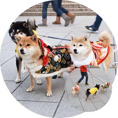 Fushimi-Inari Taisha_c0361757_22530836.jpg