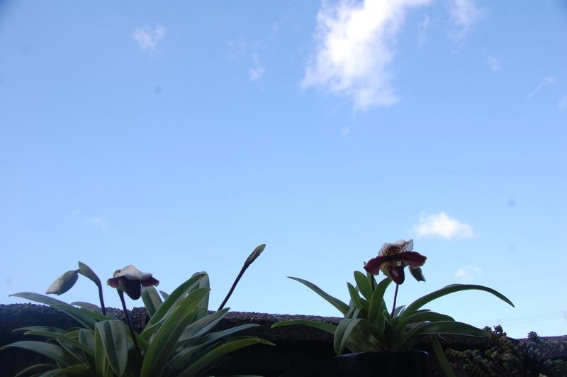我が家の花壇 耕し作業続行_c0108460_15311958.jpg