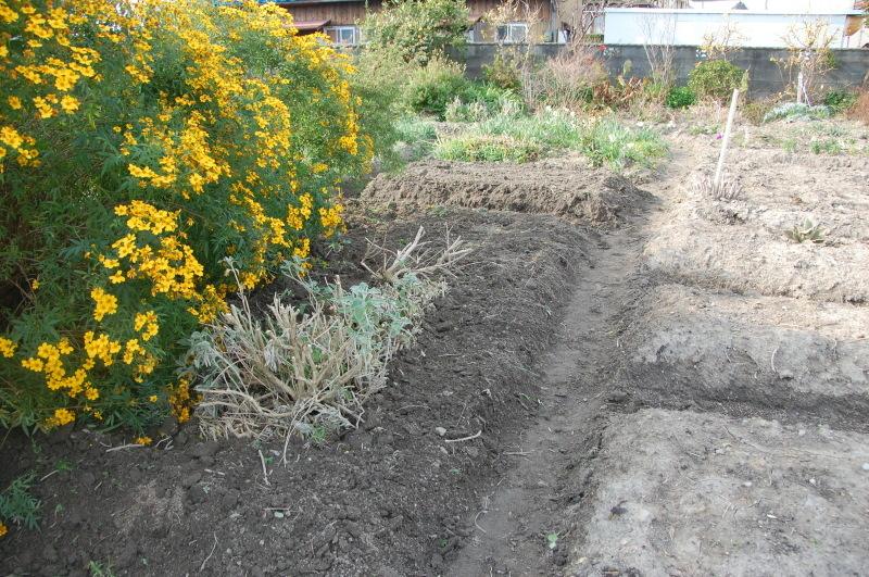 我が家の花壇 耕し作業続行_c0108460_15333764.jpg