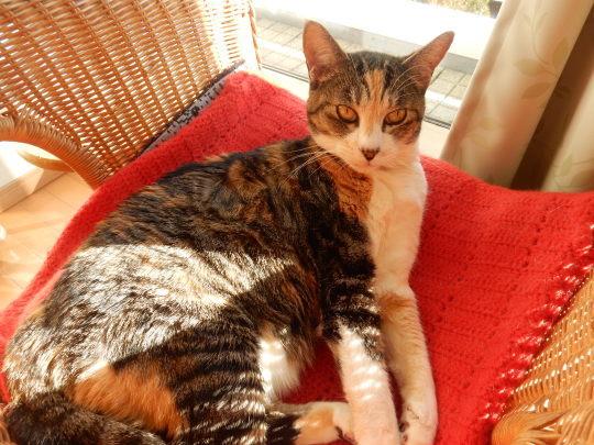 ′20,1,13(月)アルベロベッロの猫」の絵とブリの照り焼き!_f0060461_09370293.jpg