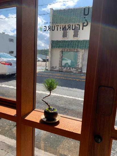 ミニ盆栽 窓際で_f0053665_16395669.jpg