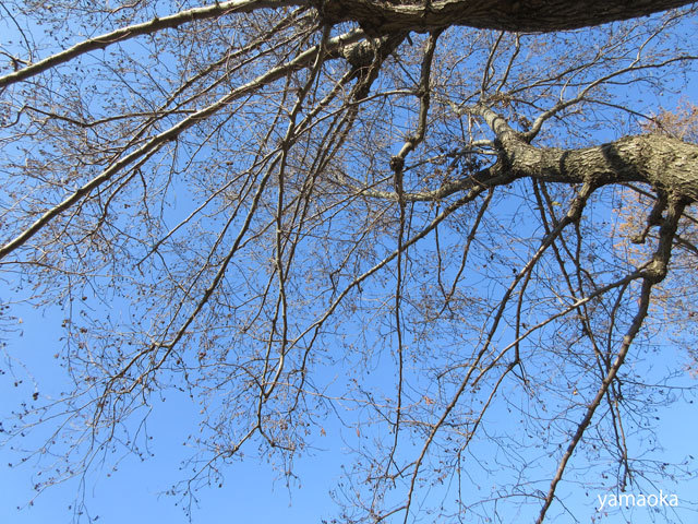 冬木よ、人間はどこへ行こうとしているのか。。。_f0071480_17360569.jpg