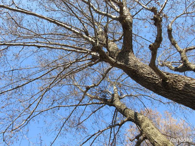 冬木よ、人間はどこへ行こうとしているのか。。。_f0071480_17360887.jpg