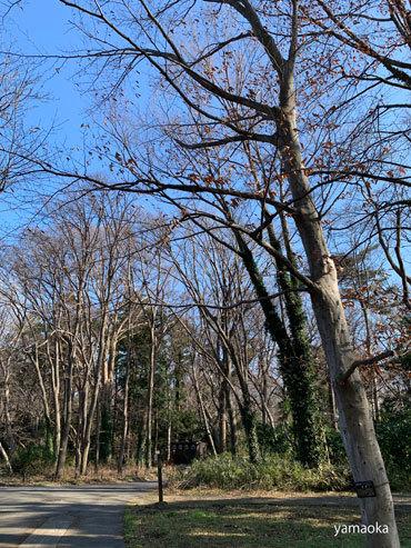 冬木よ、人間はどこへ行こうとしているのか。。。_f0071480_17361195.jpg
