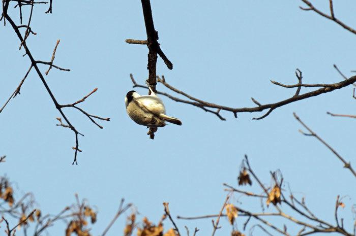小鳥_d0162994_08351552.jpg