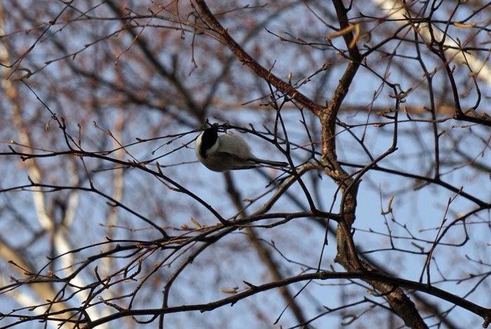 小鳥_d0162994_08352304.jpg