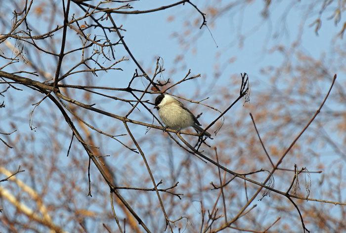 小鳥_d0162994_08354833.jpg