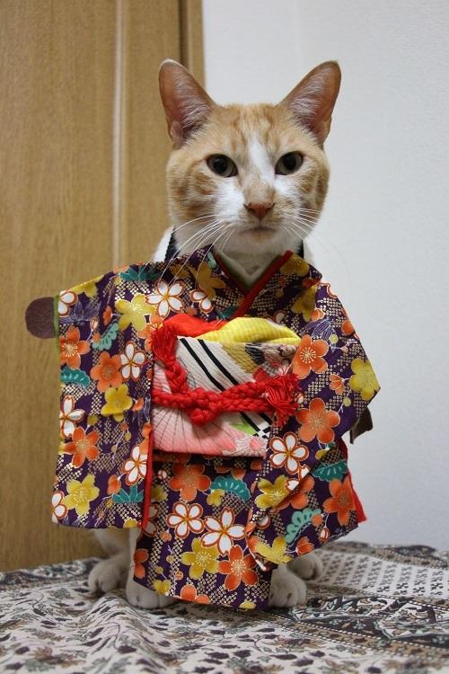 猫の着物の仕立て方(簡単)_a0333195_22115914.jpg