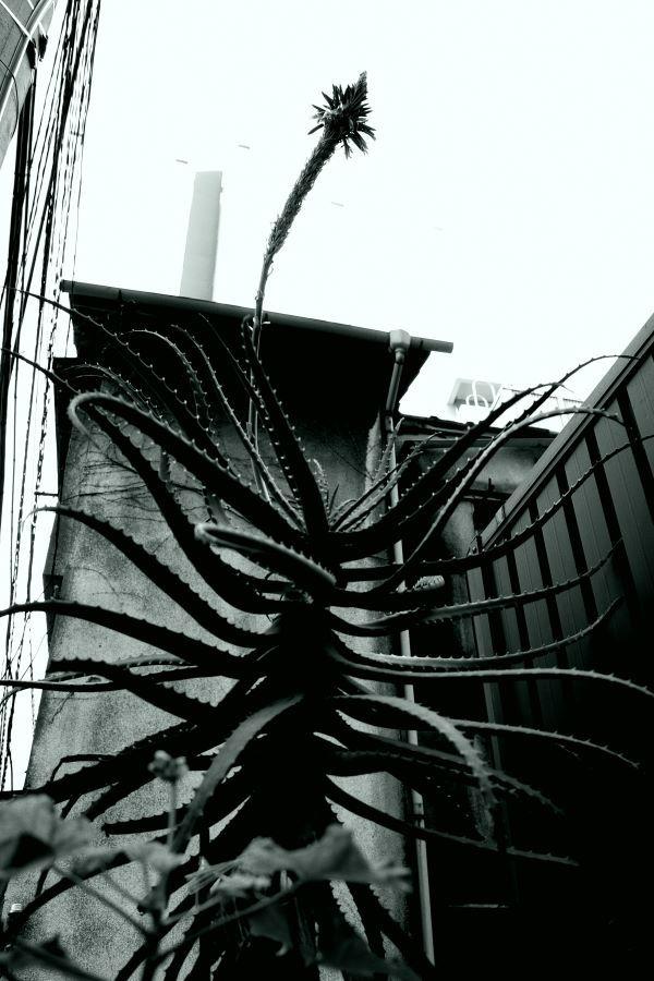 TOP(東京都写真美術館)と代官山方面スナップ_b0142405_20105946.jpg
