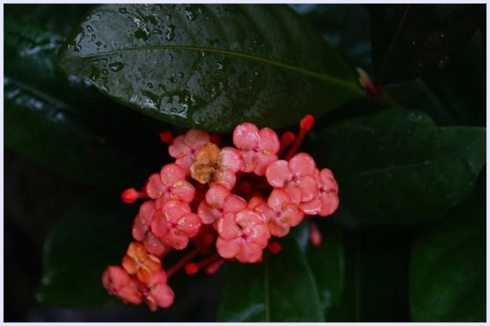 ■ 次回は桜の時期かな_b0148920_18255323.jpg