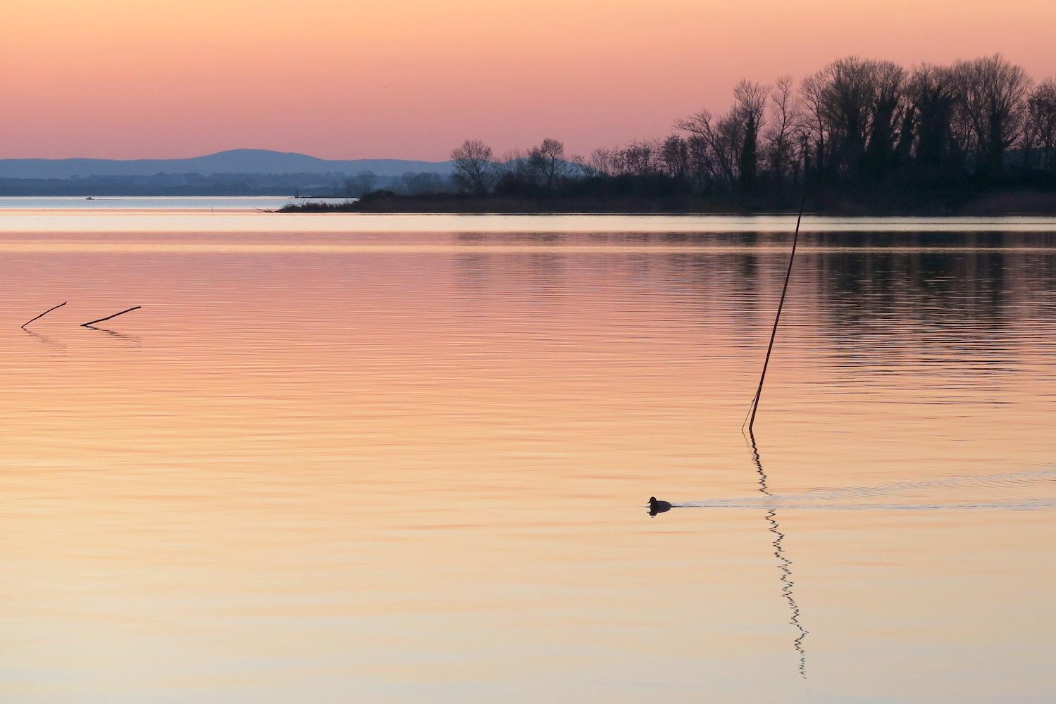 夕焼けの湖の鳥とコーヒーの鳥_f0234936_1658409.jpg