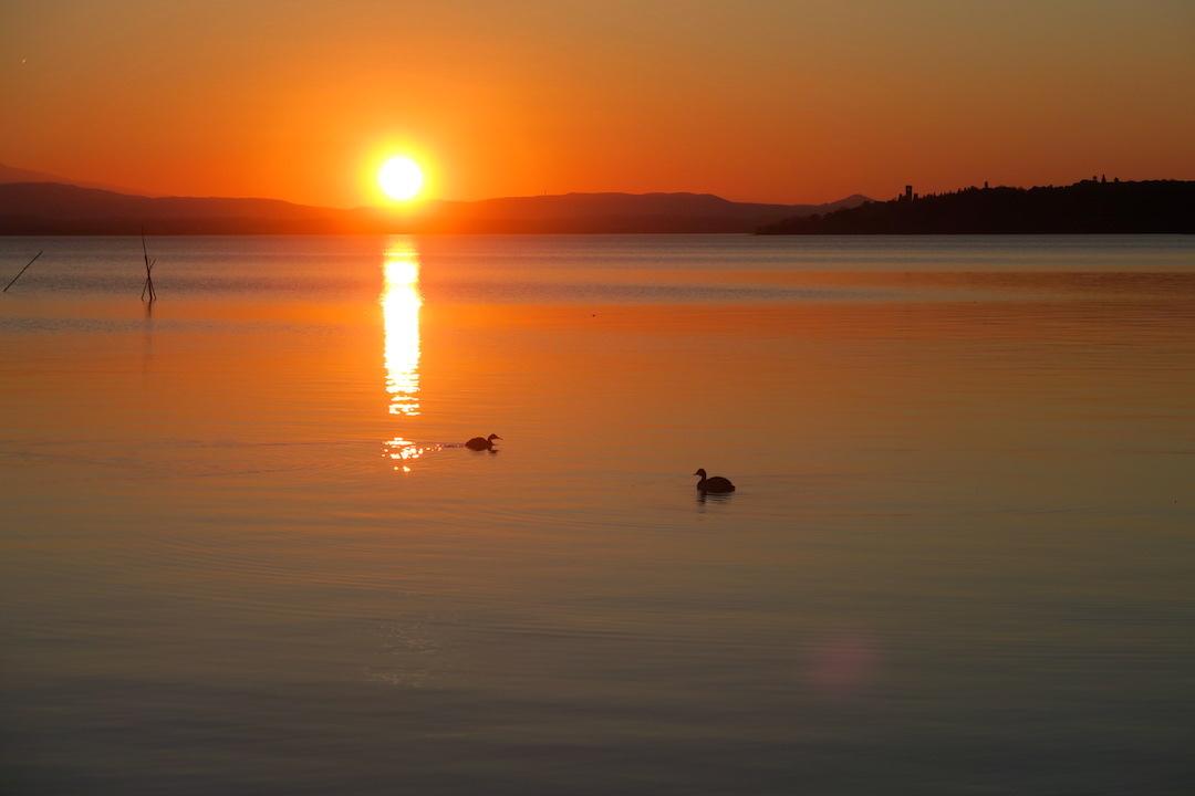 夕焼けの湖の鳥とコーヒーの鳥_f0234936_729482.jpg