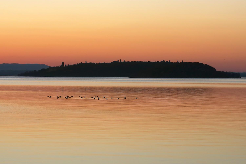 夕焼けの湖の鳥とコーヒーの鳥_f0234936_7375739.jpg