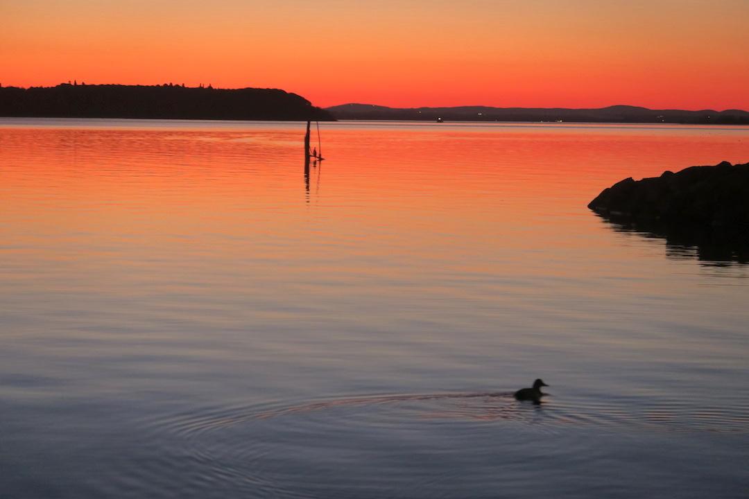 夕焼けの湖の鳥とコーヒーの鳥_f0234936_744795.jpg