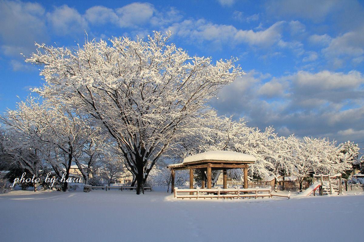 今年は暖冬!?_f0297537_10540940.jpg