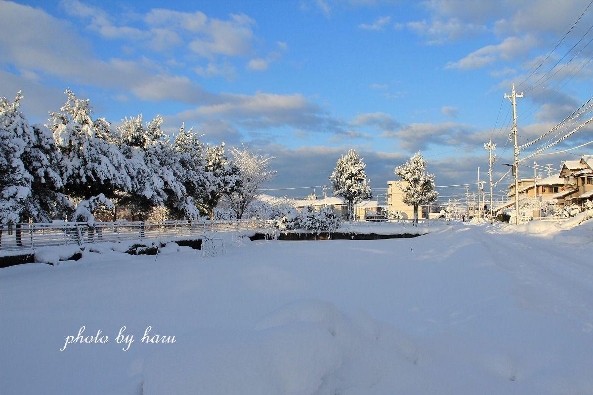 今年は暖冬!?_f0297537_10541749.jpg