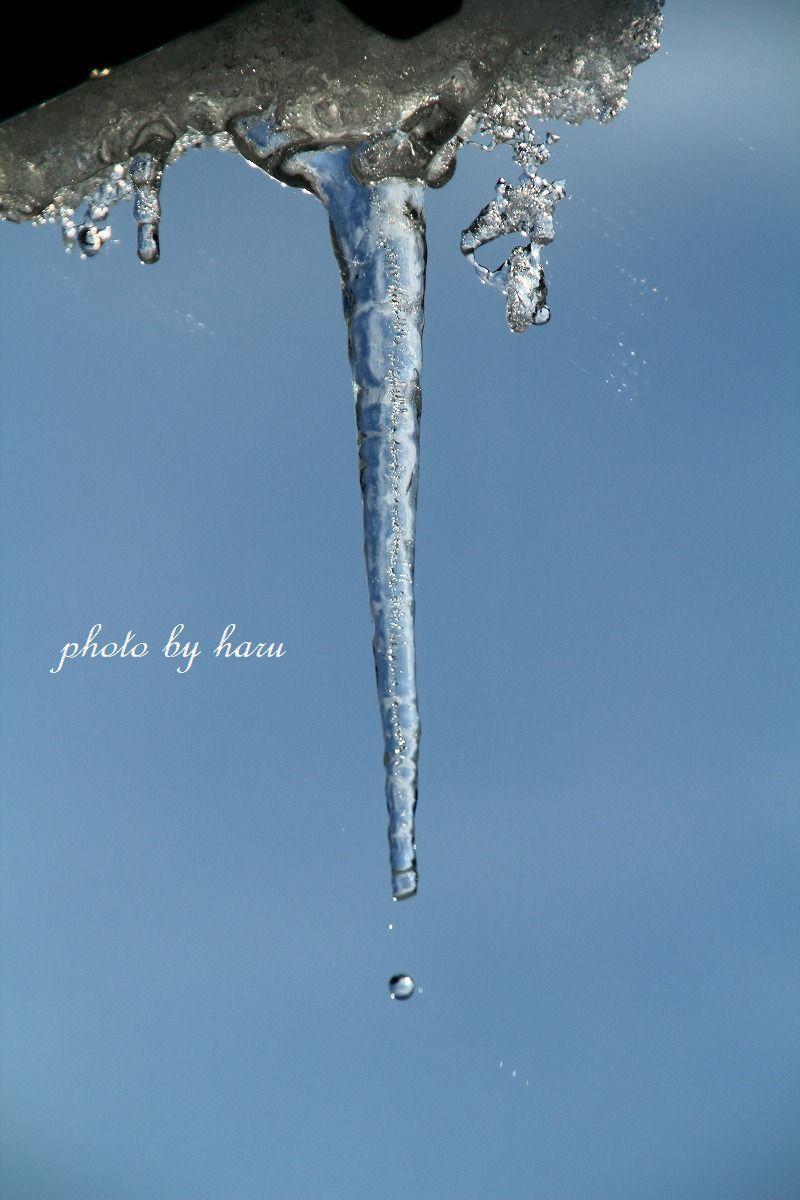 今年は暖冬!?_f0297537_10542425.jpg