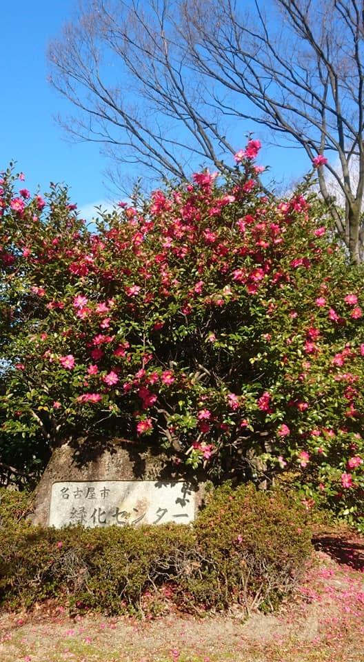 鶴舞公園へ行ってきました♪_f0373339_13352935.jpg