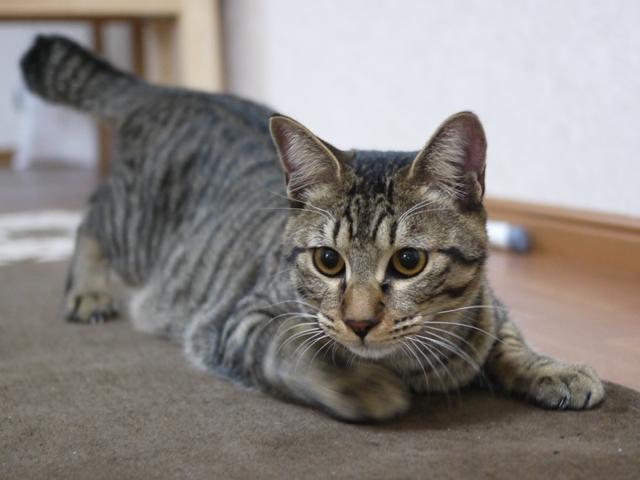 猫のお留守番 ぽんぽこくん編。_a0143140_22115884.jpg
