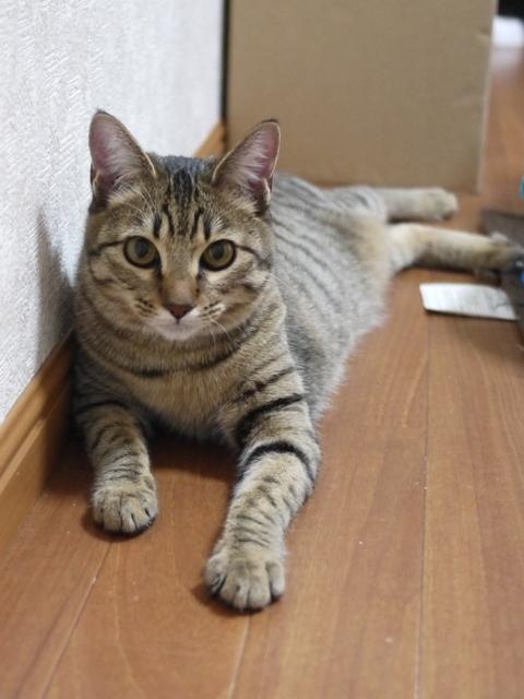 猫のお留守番 くりんちゃん編。_a0143140_22134739.jpg