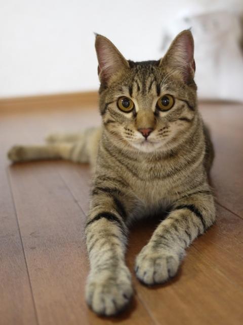 猫のお留守番 くりりんちゃん編。_a0143140_22160900.jpg