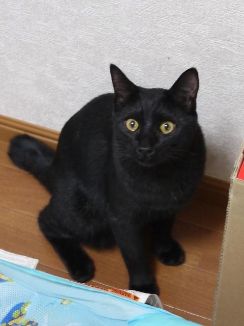 猫のお留守番 ヤマトくん編。_a0143140_22182565.jpg