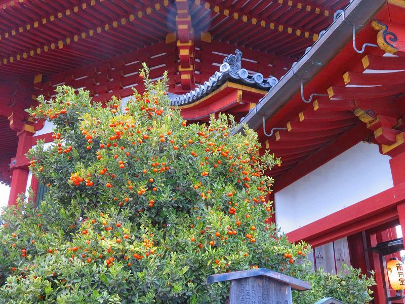 興福寺「中金堂完成」20200112_e0237645_09212713.jpg