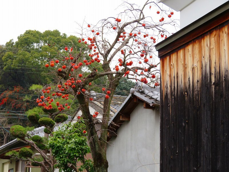 奈良西ノ京の風景20200112_e0237645_10033556.jpg