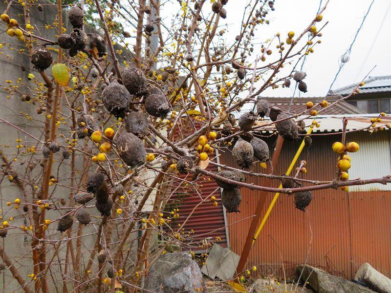 奈良西ノ京の風景20200112_e0237645_10033641.jpg