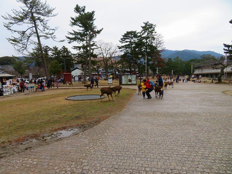 奈良国立博物館と奈良公園20200112_e0237645_15514531.jpg