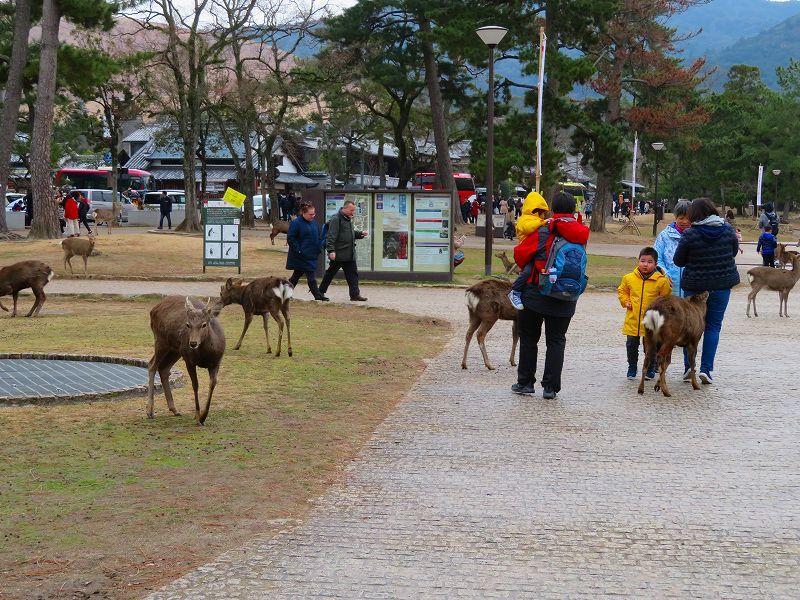奈良国立博物館と奈良公園20200112_e0237645_15523903.jpg