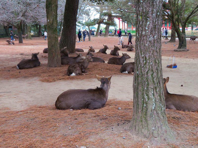 奈良国立博物館と奈良公園20200112_e0237645_15524005.jpg